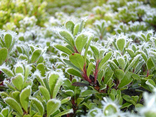 BLM Botany 03 (6871307185)