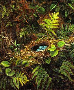 Still Life with Robin's Nest by Fidelia Bridges