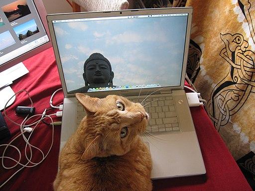 Computer Using Cat