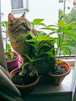 Katze Emmy im Blumentopf sitzend